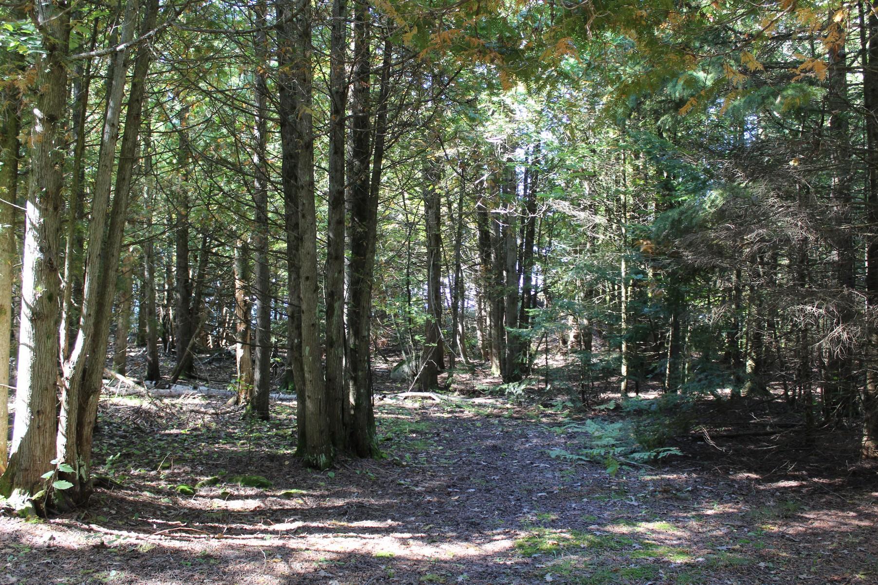 Property Of Beaver Island Waterfront Acreage