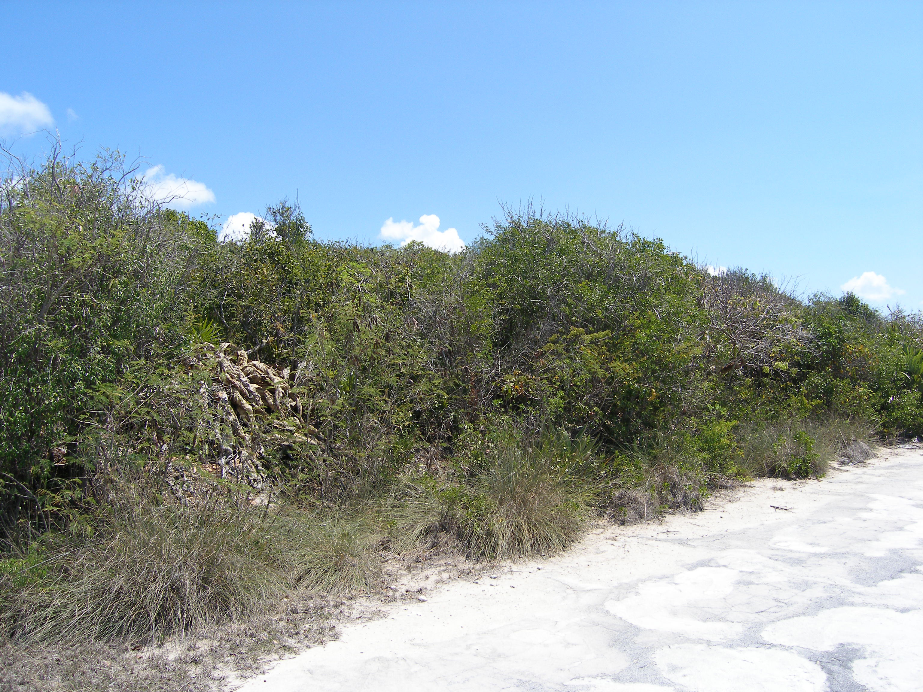 Additional photo for property listing at Lot 6, Block 14, Section A Rainbow Bay, Eleuthera Bahamas