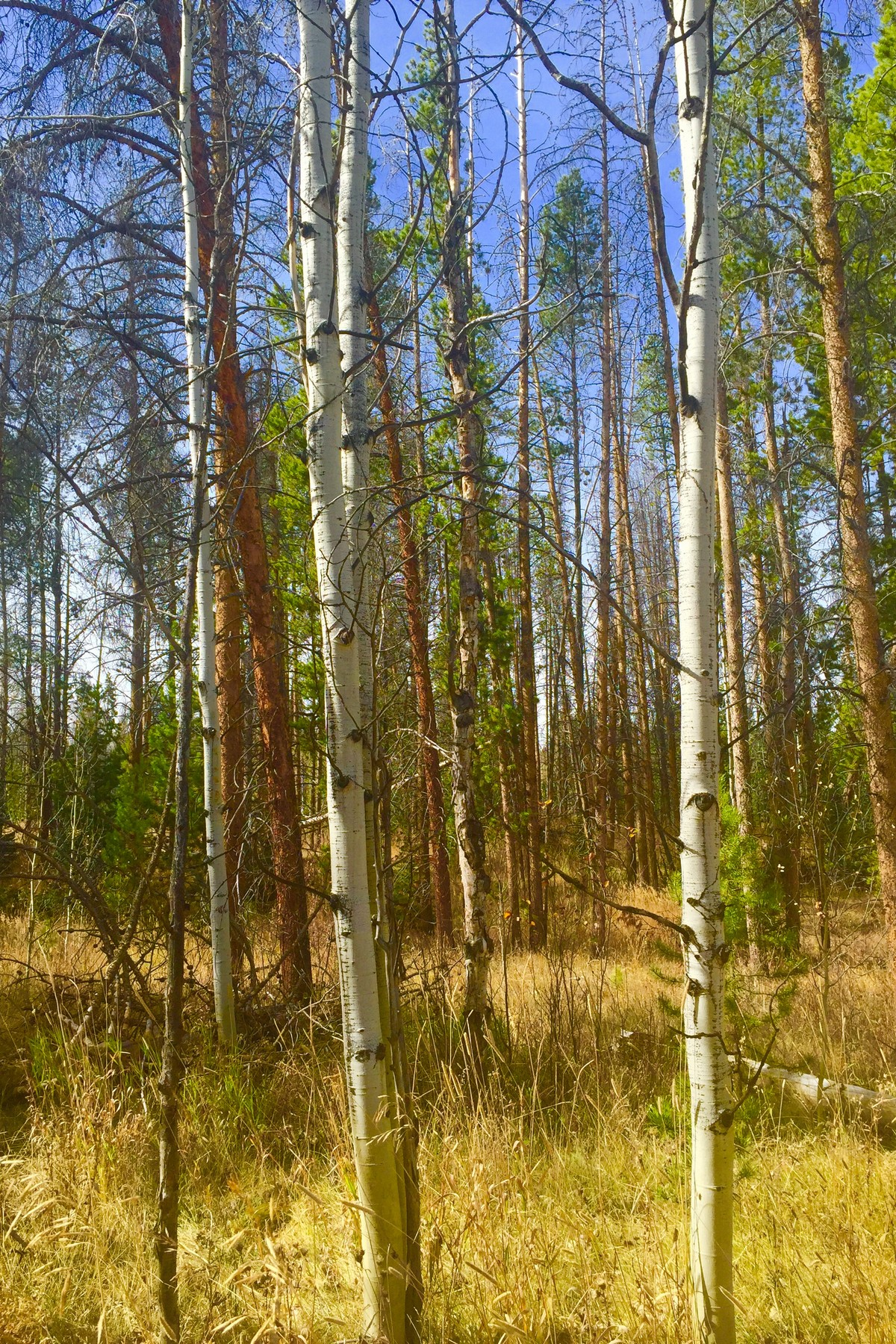 Land for Sale at Stagecoach Lot 21075 Stallion Way Stagecoach, Oak Creek, Colorado 80467 United States