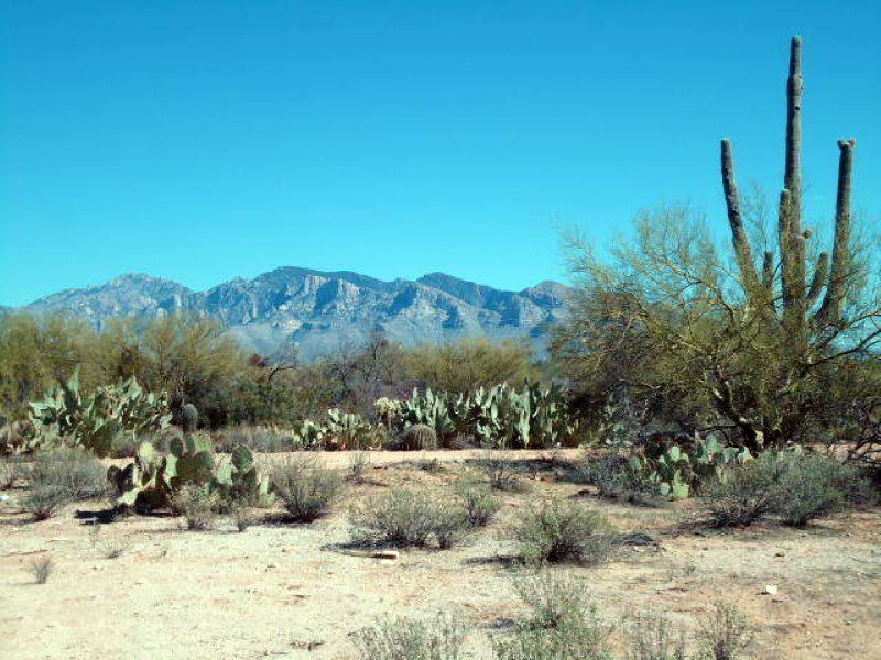 Land for Sale at Great Development Opportunity or Own Your Own Ranch on 16+ Acres 12162 N Camino Del Plata #1 Oro Valley, Arizona 85742 United States