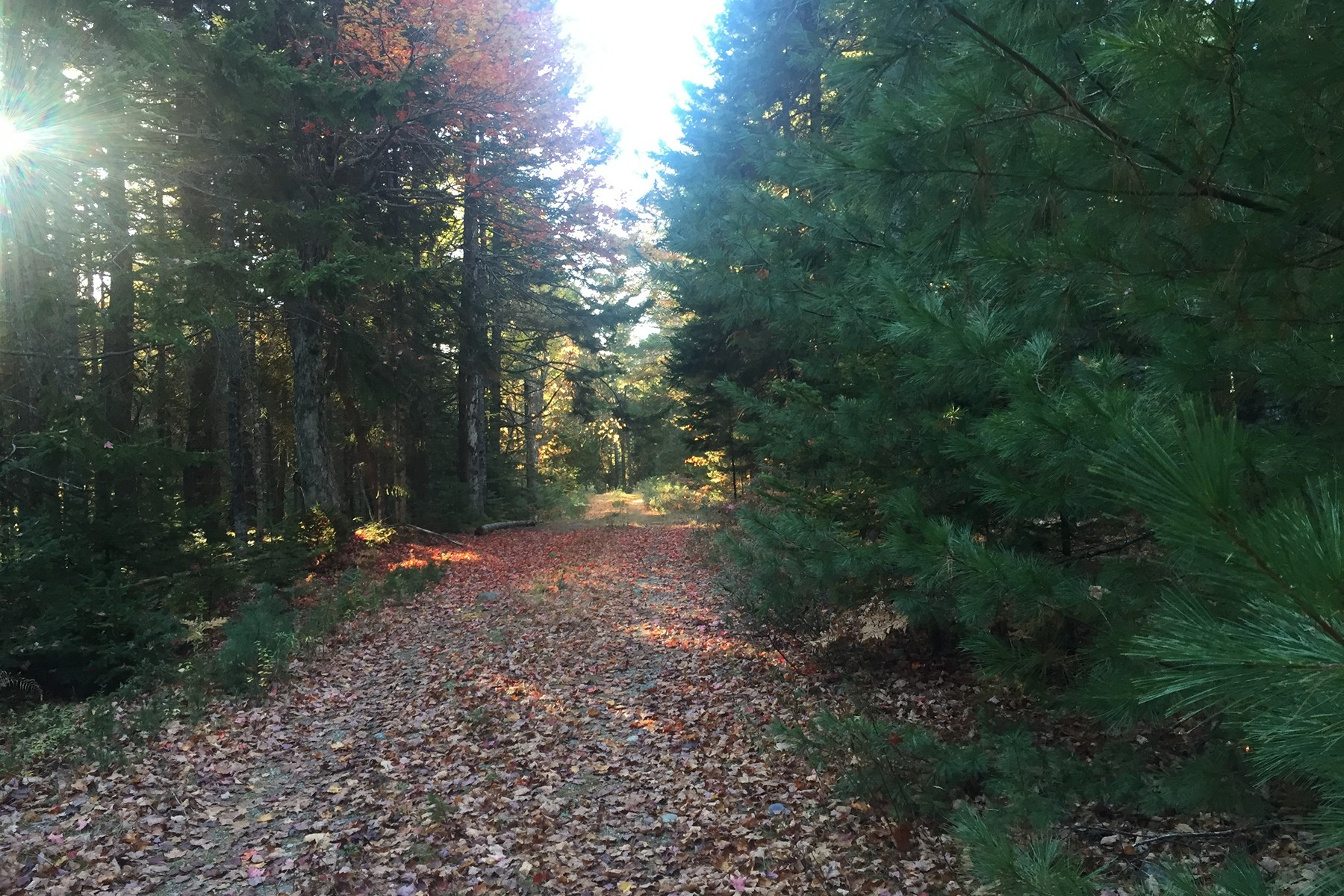 Land for Sale at The Hemlocks Lot 1 Hemlock Lane Mount Desert, Maine, 04660 United States