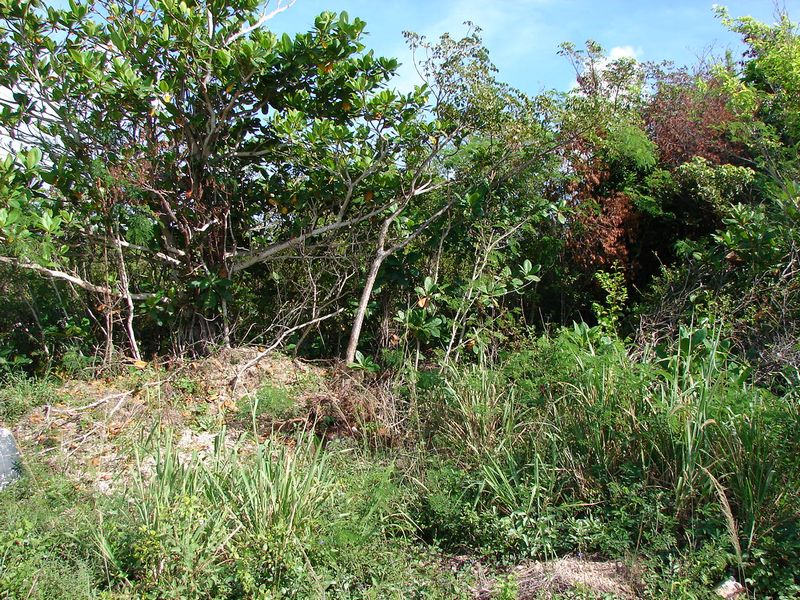 Land for Sale at Lot 18, Block 42, Section E Eleuthera Island Shores, Gregory Town, Eleuthera Bahamas