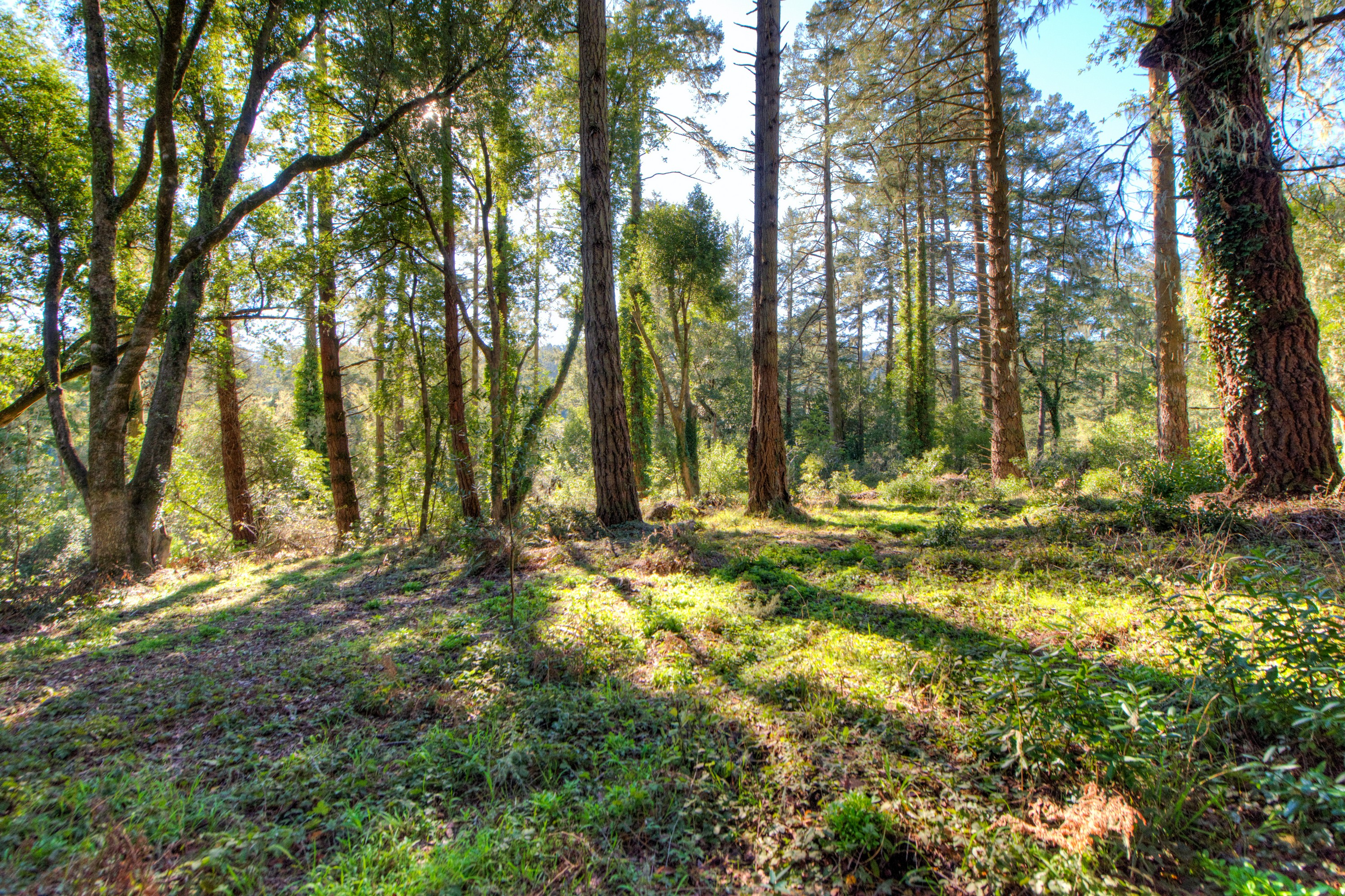 Land for Sale at Two Sunny Level Lots 137 - 141 Laurel Street Point Reyes Station, California, 94956 United States