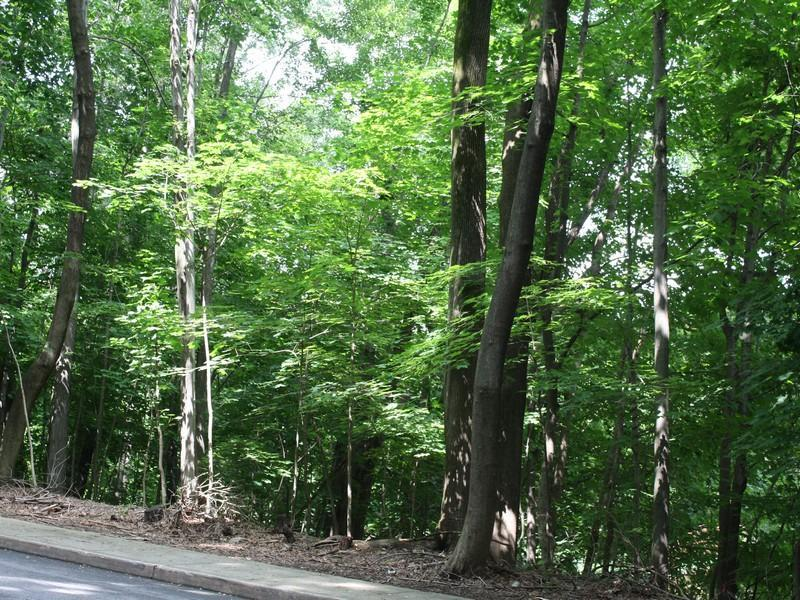 Land for Sale at Wooded Retreat 57 North Old Post Road Croton On Hudson, New York 10520 United States