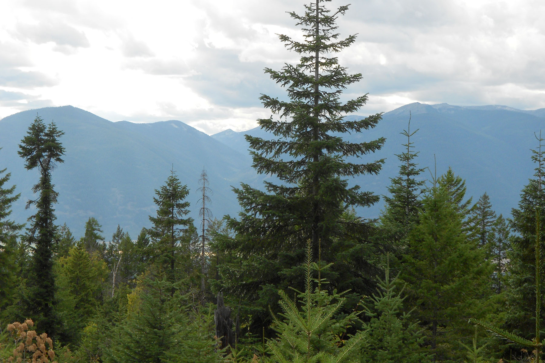 Земля для того Продажа на 40 Acres bordered 2 sides by Nat. Forest 40 ac. off Forest Service Rd 397 Bonners Ferry, Айдахо 83805 Соединенные Штаты