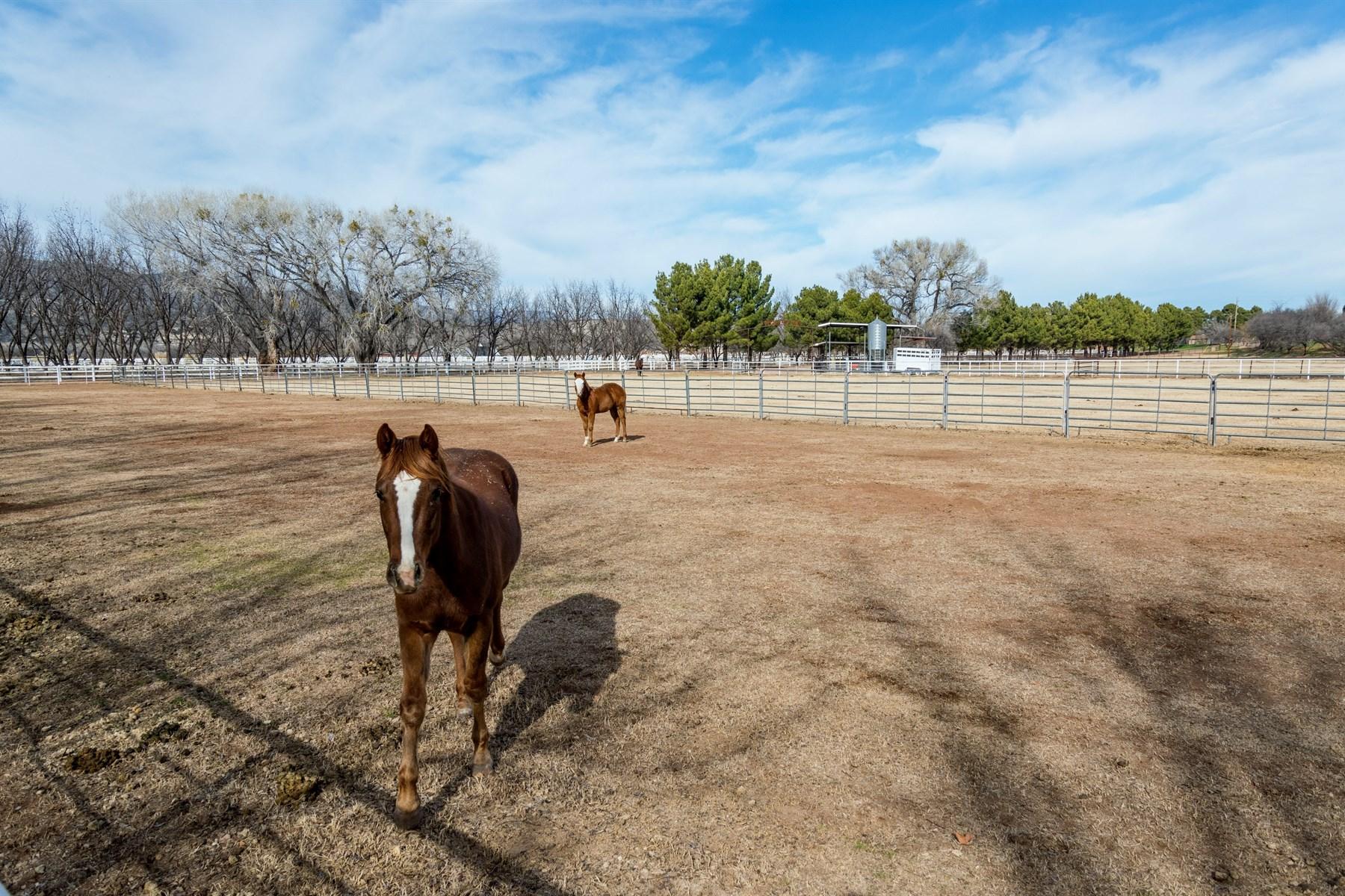 Moradia para Venda às True equestrian estate with a 21.22 acre residence 173 W Grippen Rd Camp Verde, Arizona, 86322 Estados Unidos