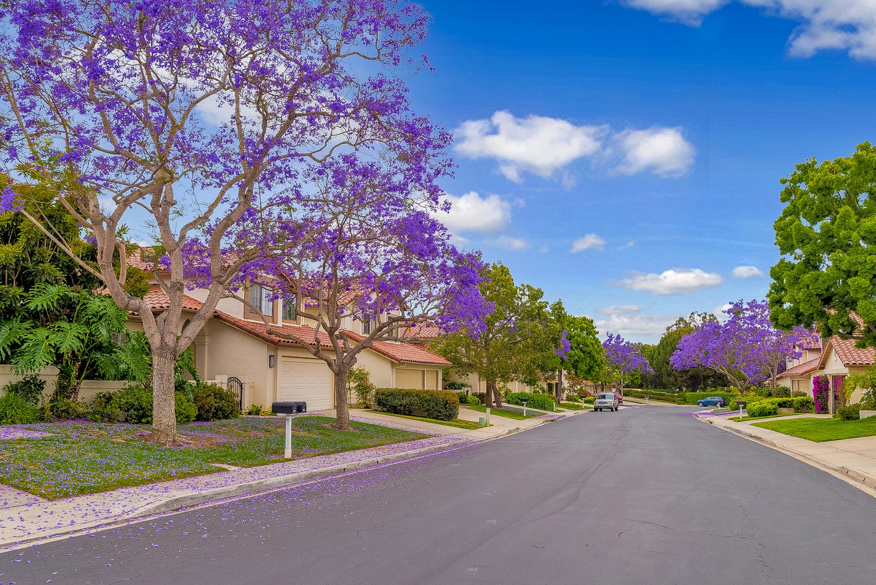 獨棟家庭住宅 為 出售 在 4026 Caminito Cassis San Diego, 加利福尼亞州, 92122 美國