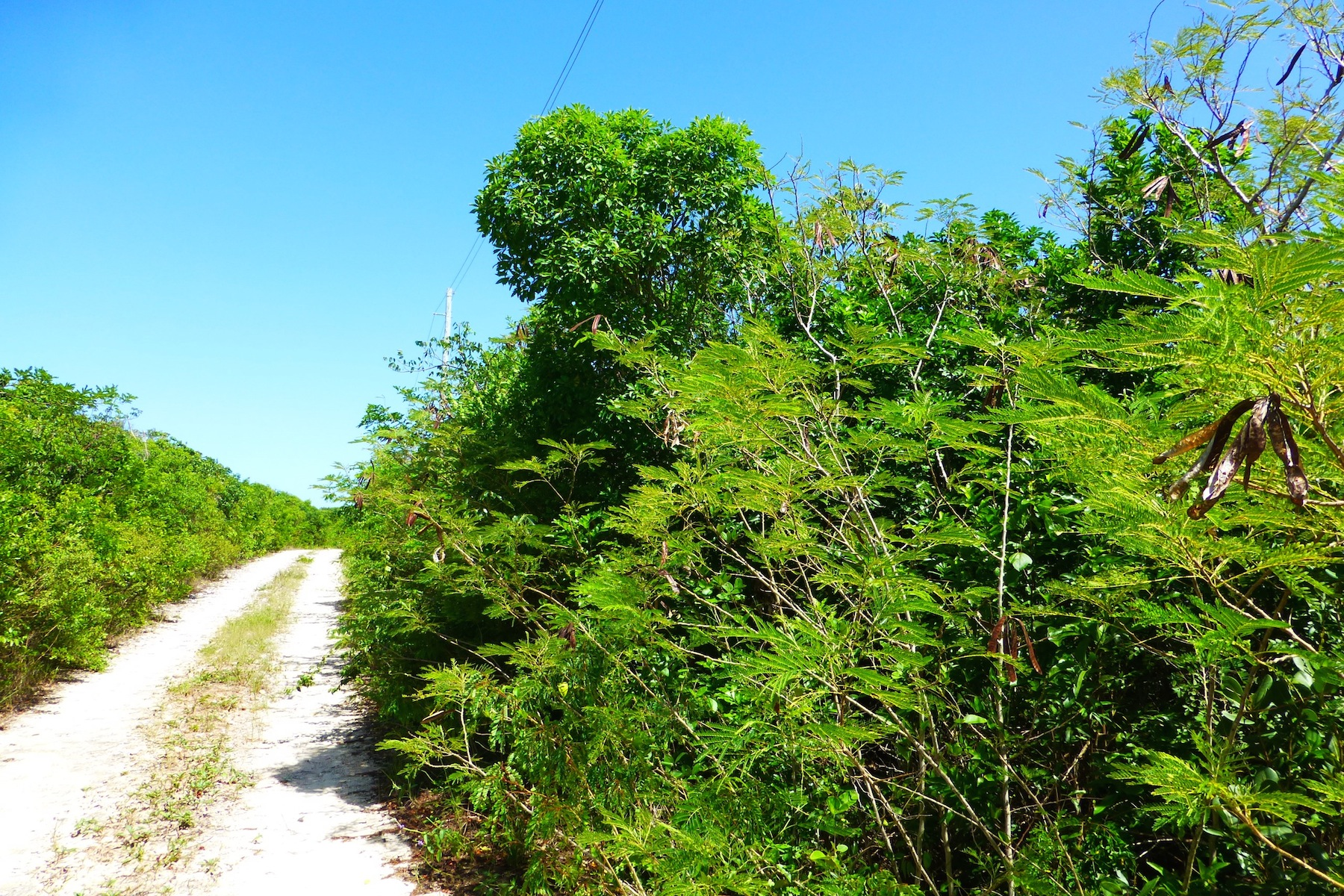 Additional photo for property listing at EIS Lot 2 Block 51-F Gregory Town, Eleuthera Bahamas