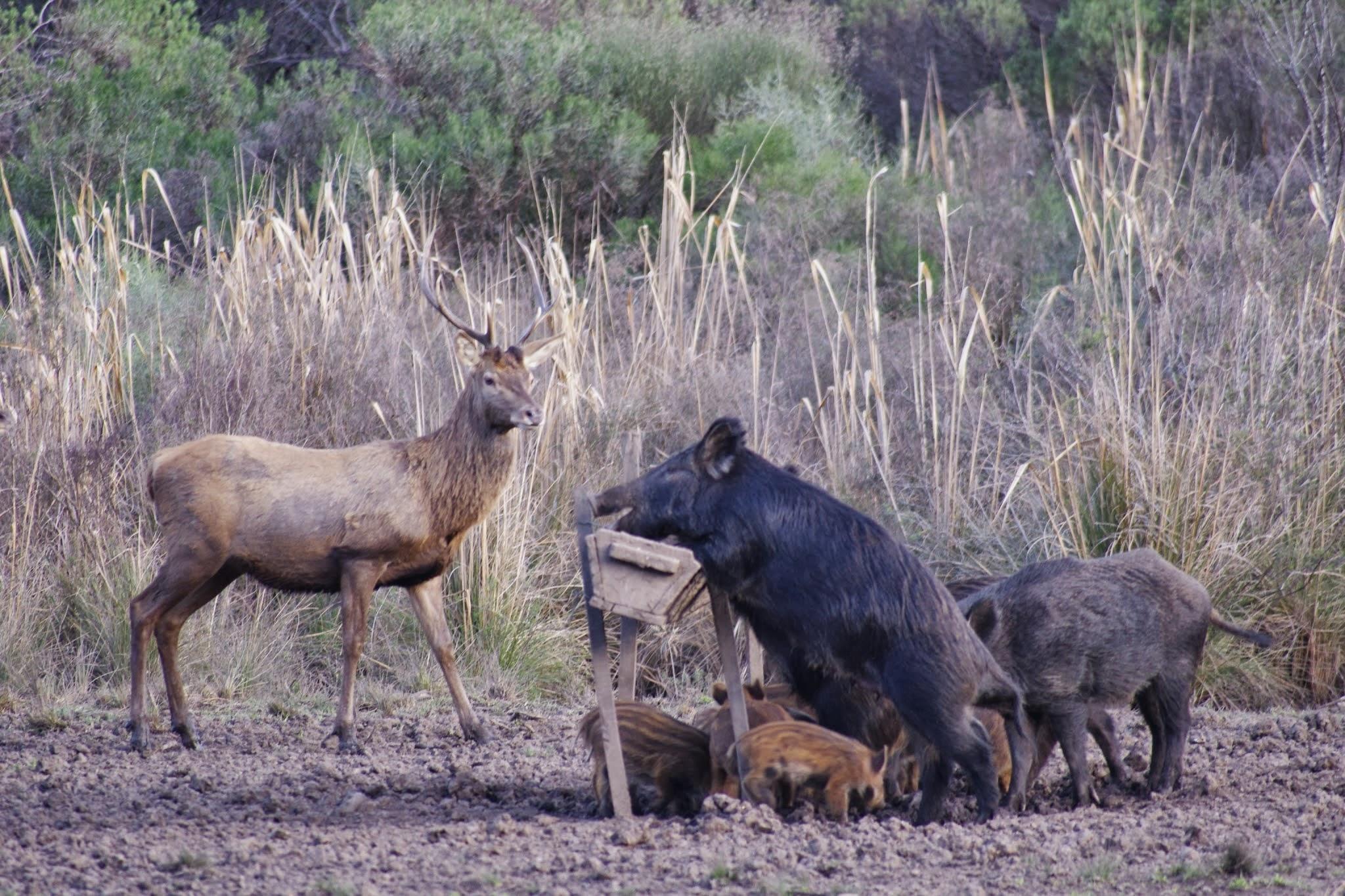 Property Of RINCON DE LOS MATREROS - Hunting Ranch