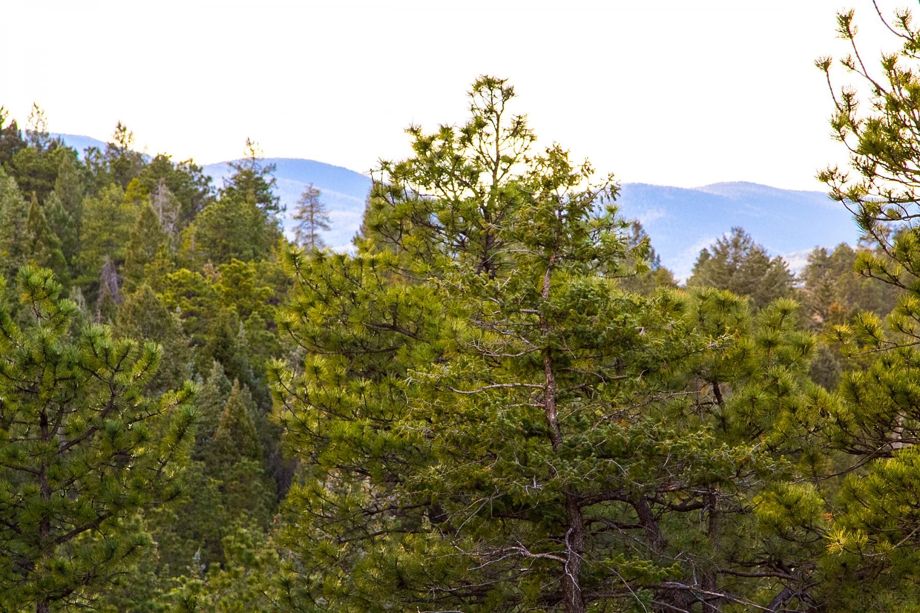 地產 為 出售 在 Southern Facing Land with Mountain Views N Turkey Creek Road Lot 17 Evergreen, 科羅拉多州 80439 美國