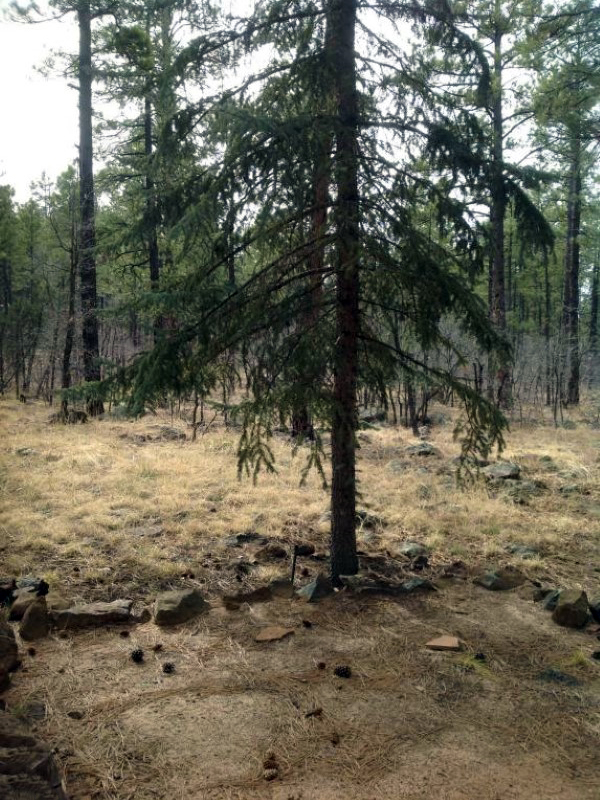 토지 용 매매 에 2-1/2 Acre Get-Away Homesite in Pinetop-Lakeside 1420 W Sadler Lane #18 Pinetop, 아리조나 85935 미국