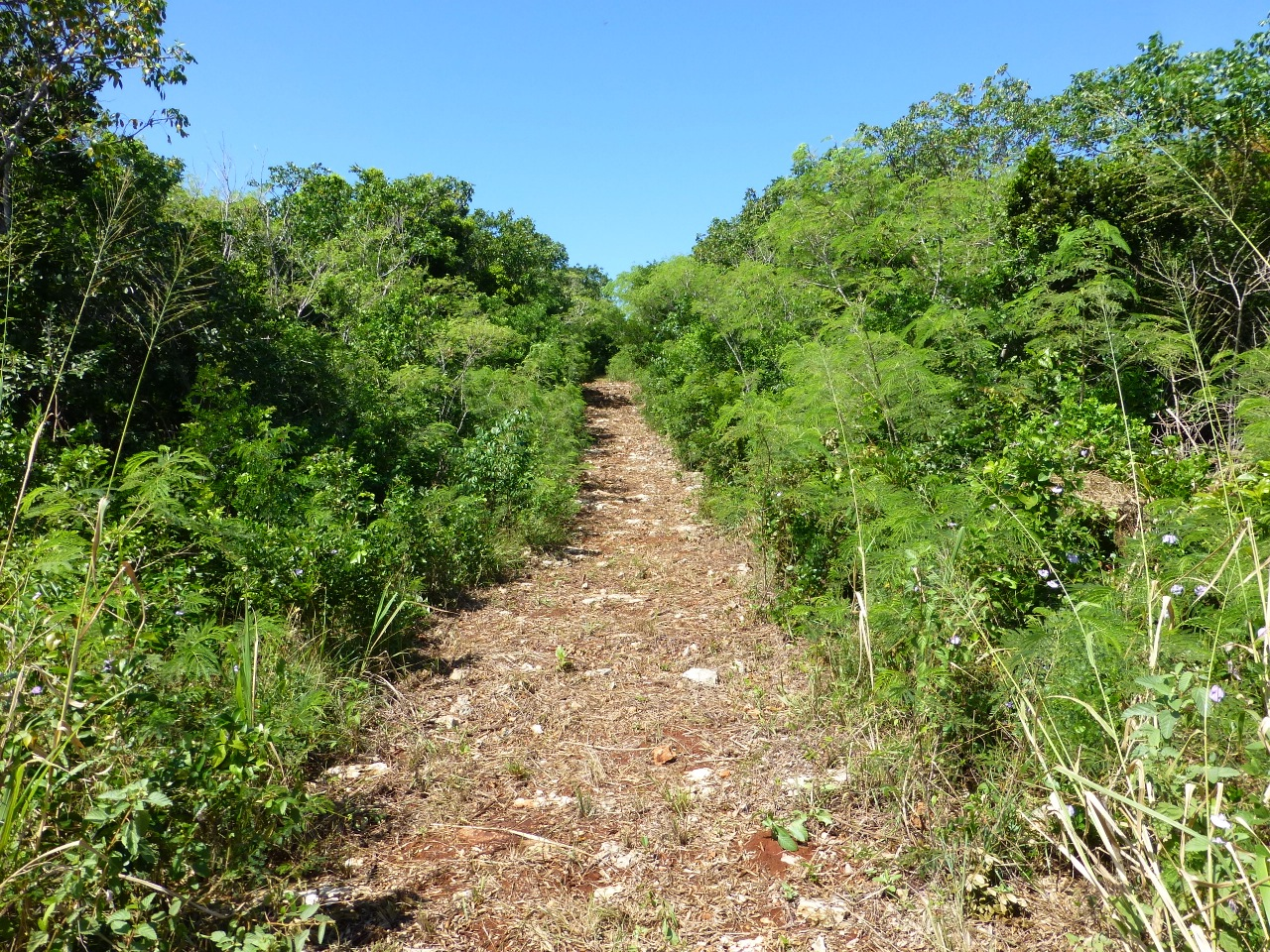 Additional photo for property listing at Secluded Seaside Acreage 格里高利城, 伊路瑟拉 巴哈马