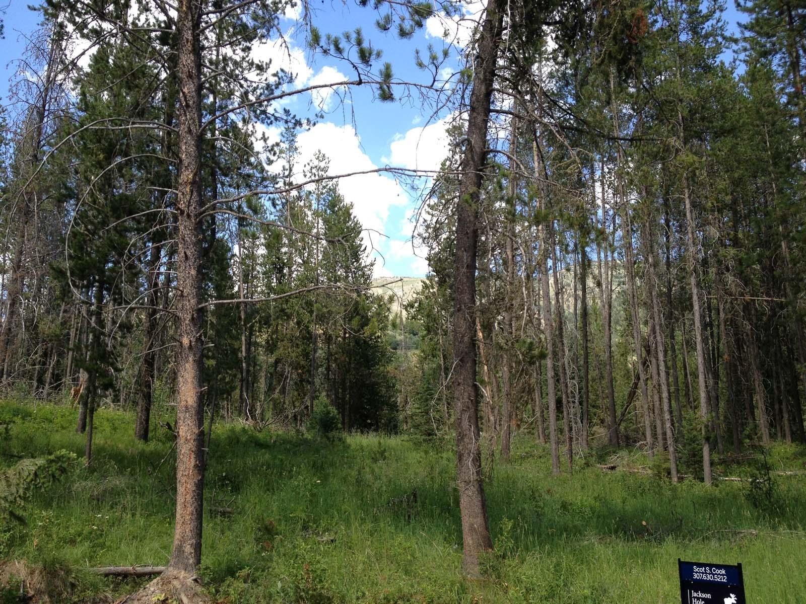 Terrain pour l Vente à Homesite Bordering National Forest Lot 7 Indian Creek Subdivision Alpine, Wyoming 83128 États-Unis