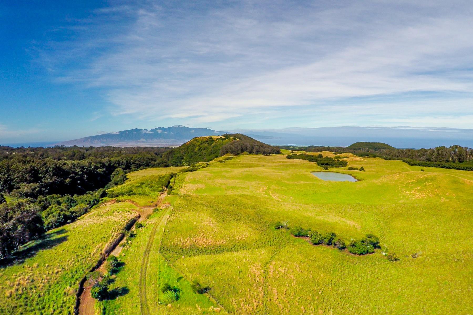 Terreno para Venda às Piiholo Ranch 325 Waiahiwi Road, Piiholo Ranch Makawao, Havaí, 96768 Estados Unidos