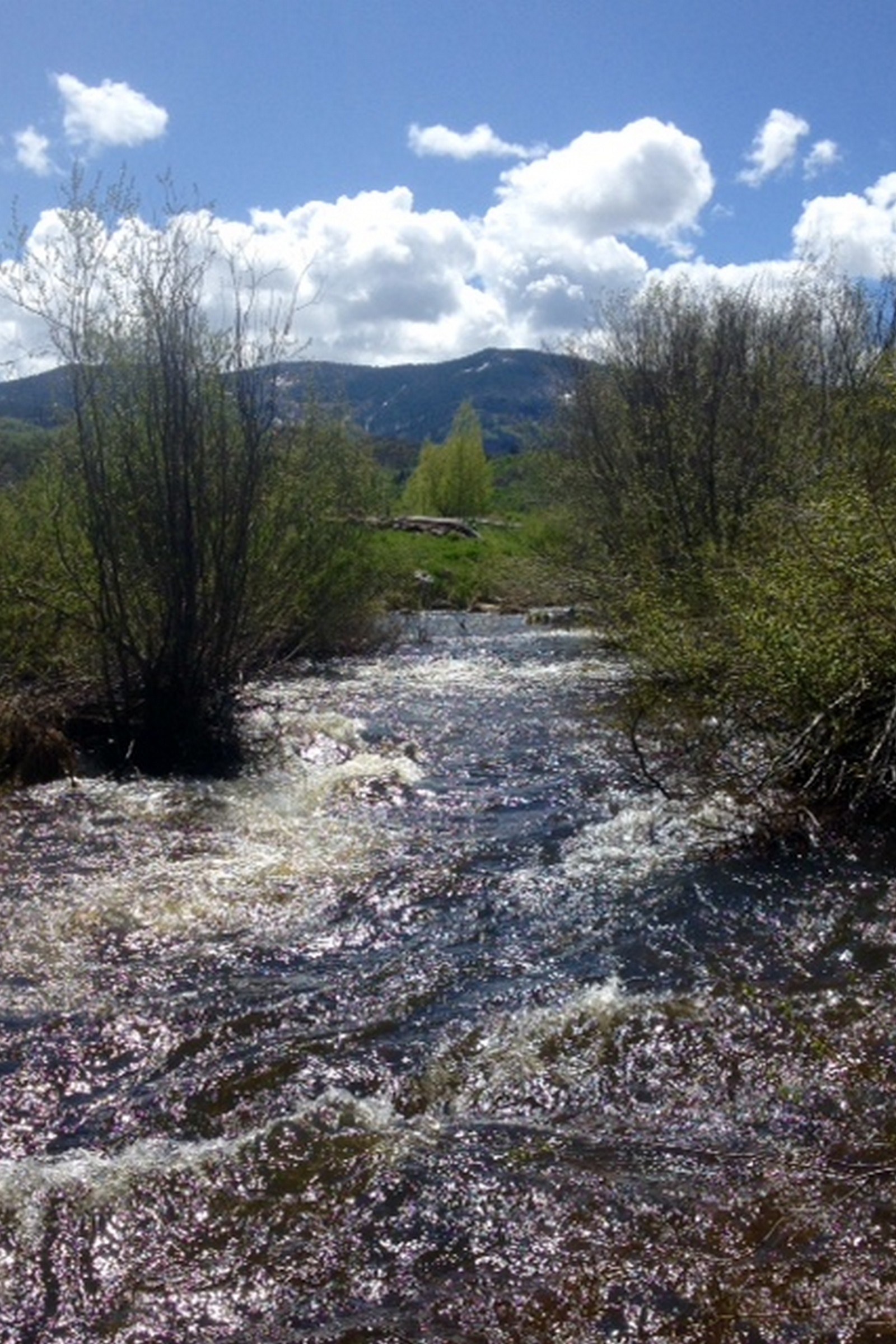Terrain pour l Vente à Pristine Priest Creek Ranch Lot 35375 Priest Creek Road Steamboat Springs, Colorado, 80487 États-Unis