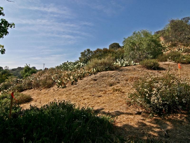 Property For Sale at 0 Esperanza/Yucca