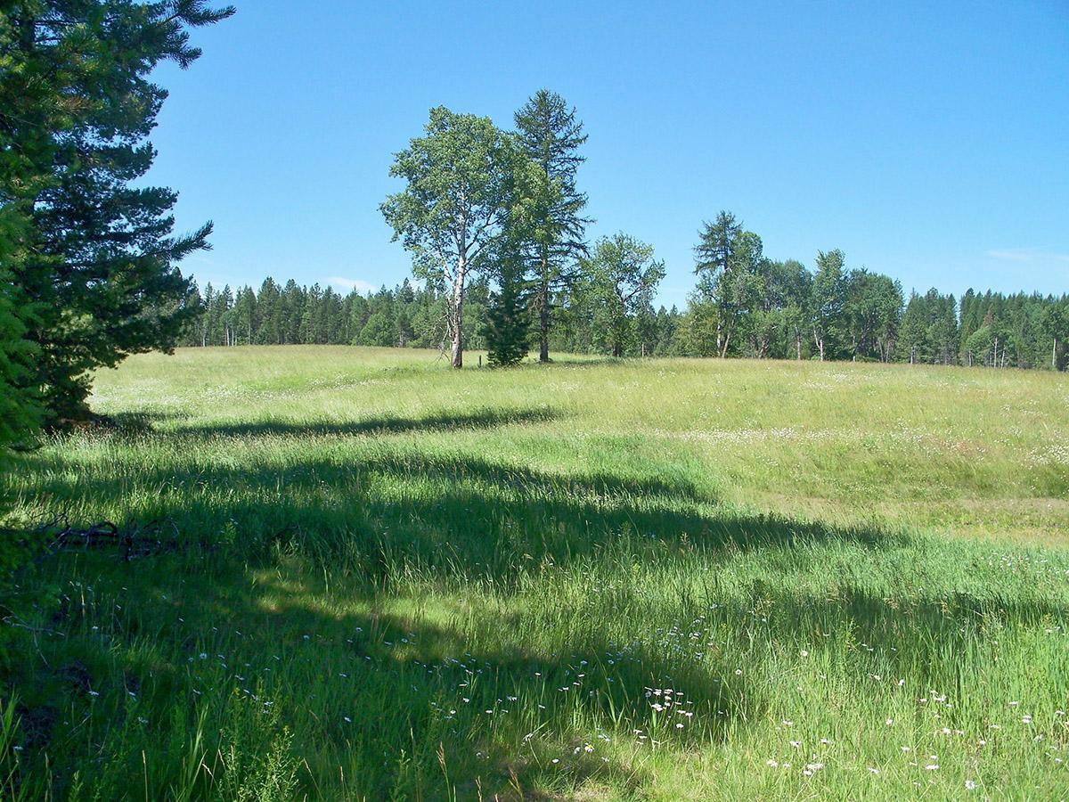 地產 為 出售 在 Green Pastures, Trees and Mountain views NNA Gallop Circle Lot 16 Sagle, 愛達荷州 83860 美國