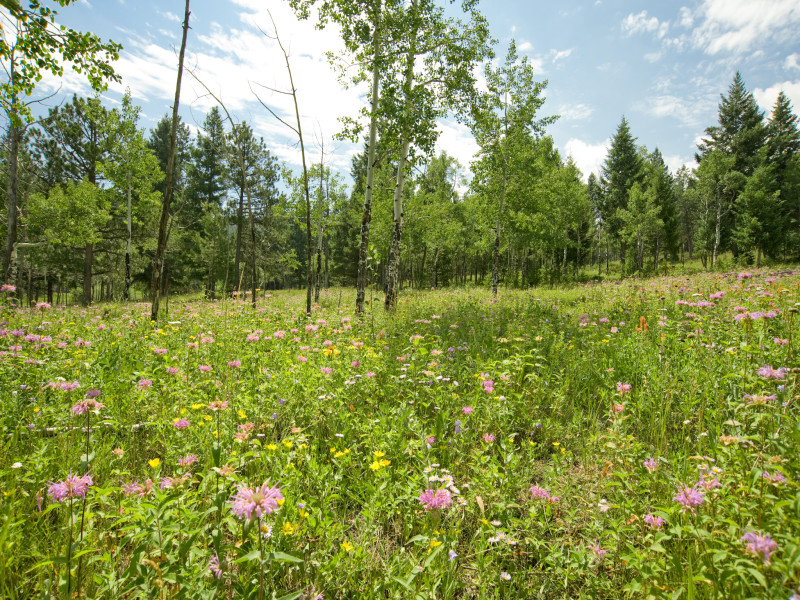 Land für Verkauf beim Exclusive Cub Creek Ranch Community 6273 Little Cub Creek Road Evergreen, Colorado 80439 Vereinigte Staaten