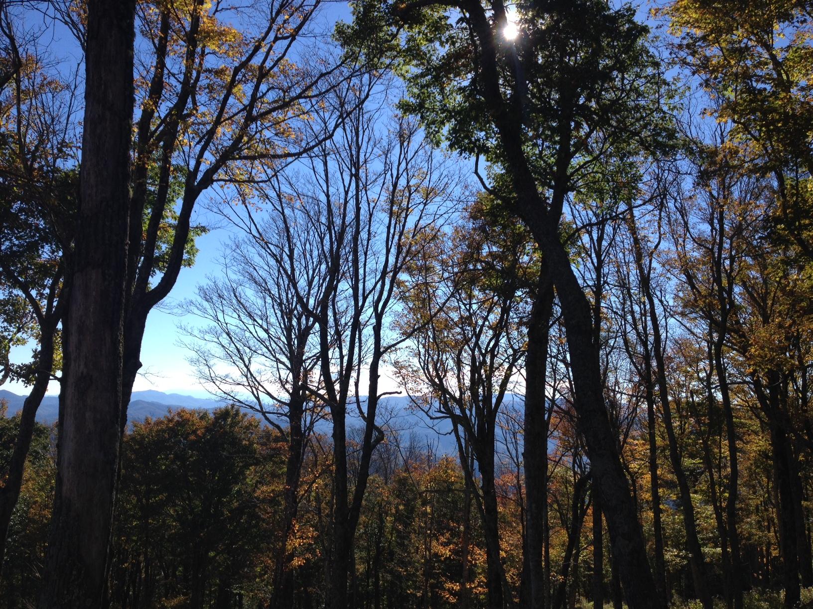 Land for Sale at Eagles Nest Lodge Homesite 20 Lot L-20 Eagles Nest Trail Banner Elk, North Carolina 28604 United States