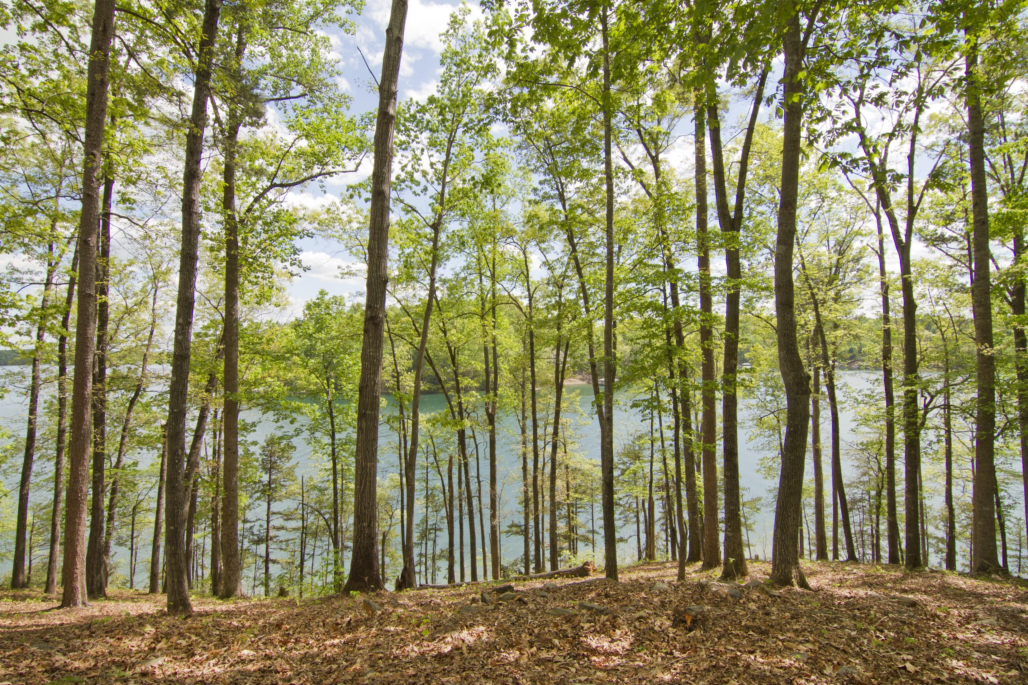 토지 용 매매 에 Elevated Profile for Stunning Lake Keowee Views TL51 Salem, 사우스캐놀라이나, 29676 미국