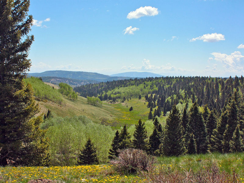 Đất đai vì Bán tại Triangle Ranch TBD Forest Road 87 Tierra Amarilla, New Mexico 87575 Hoa Kỳ