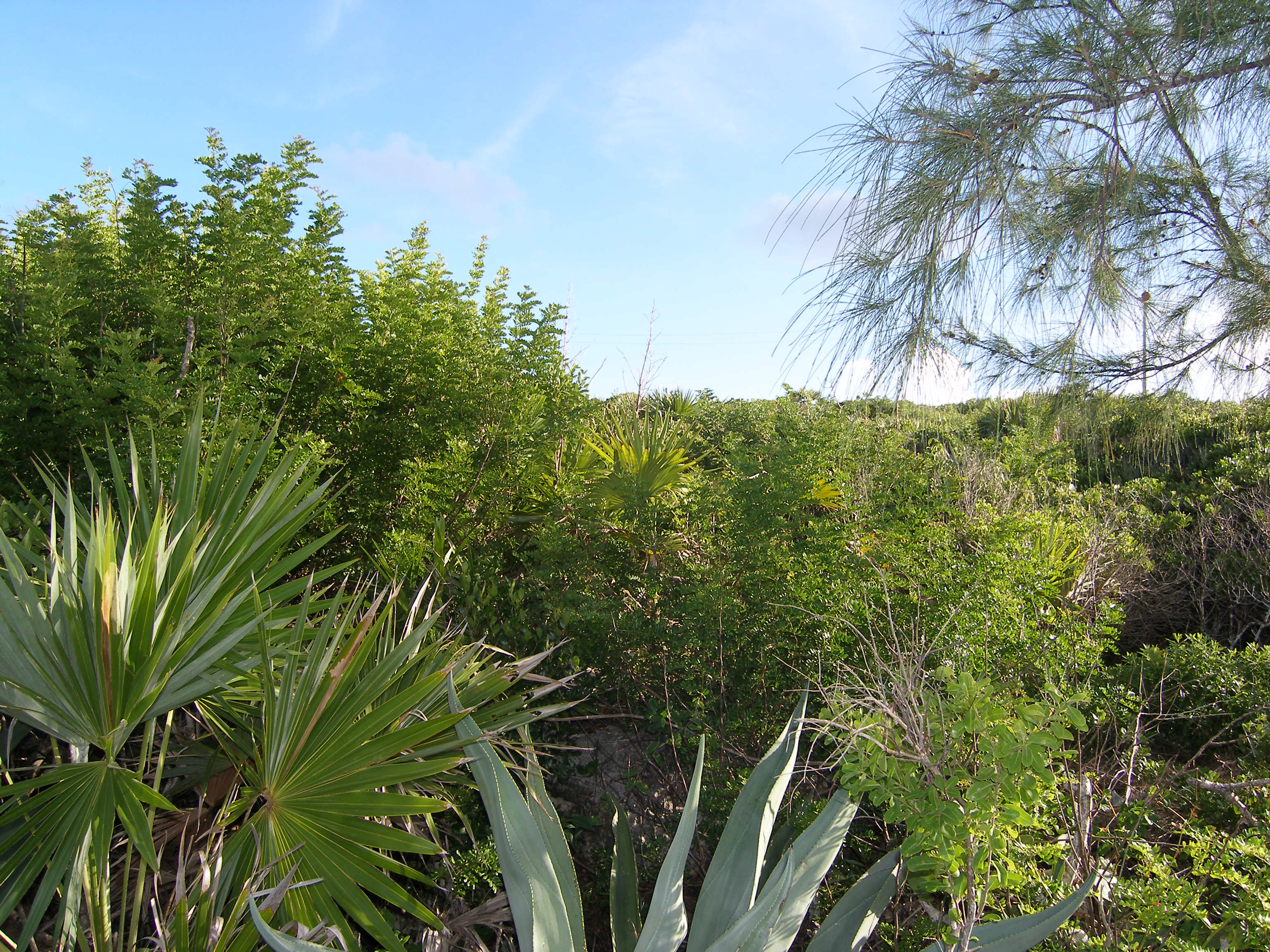 Additional photo for property listing at Incredible Views Rainbow Bay, Eleuthera Bahamas