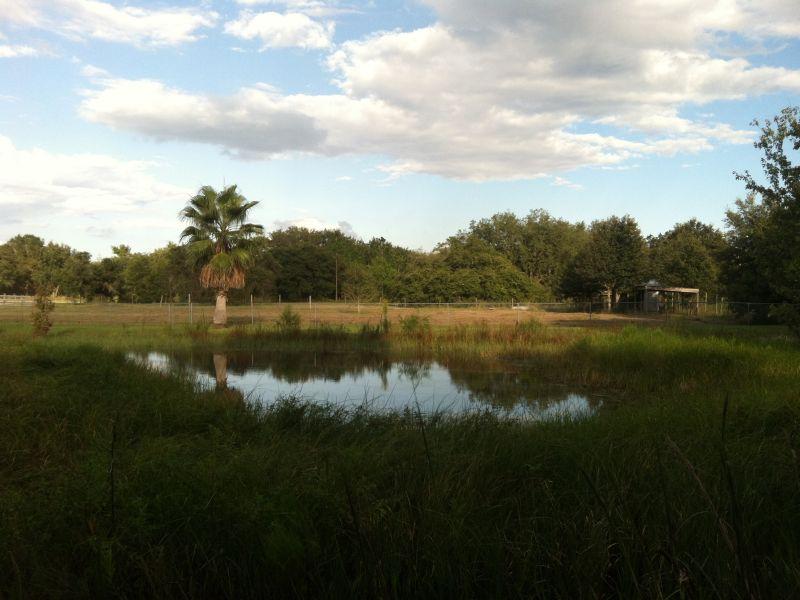 Property Of Champions Gate, Florida