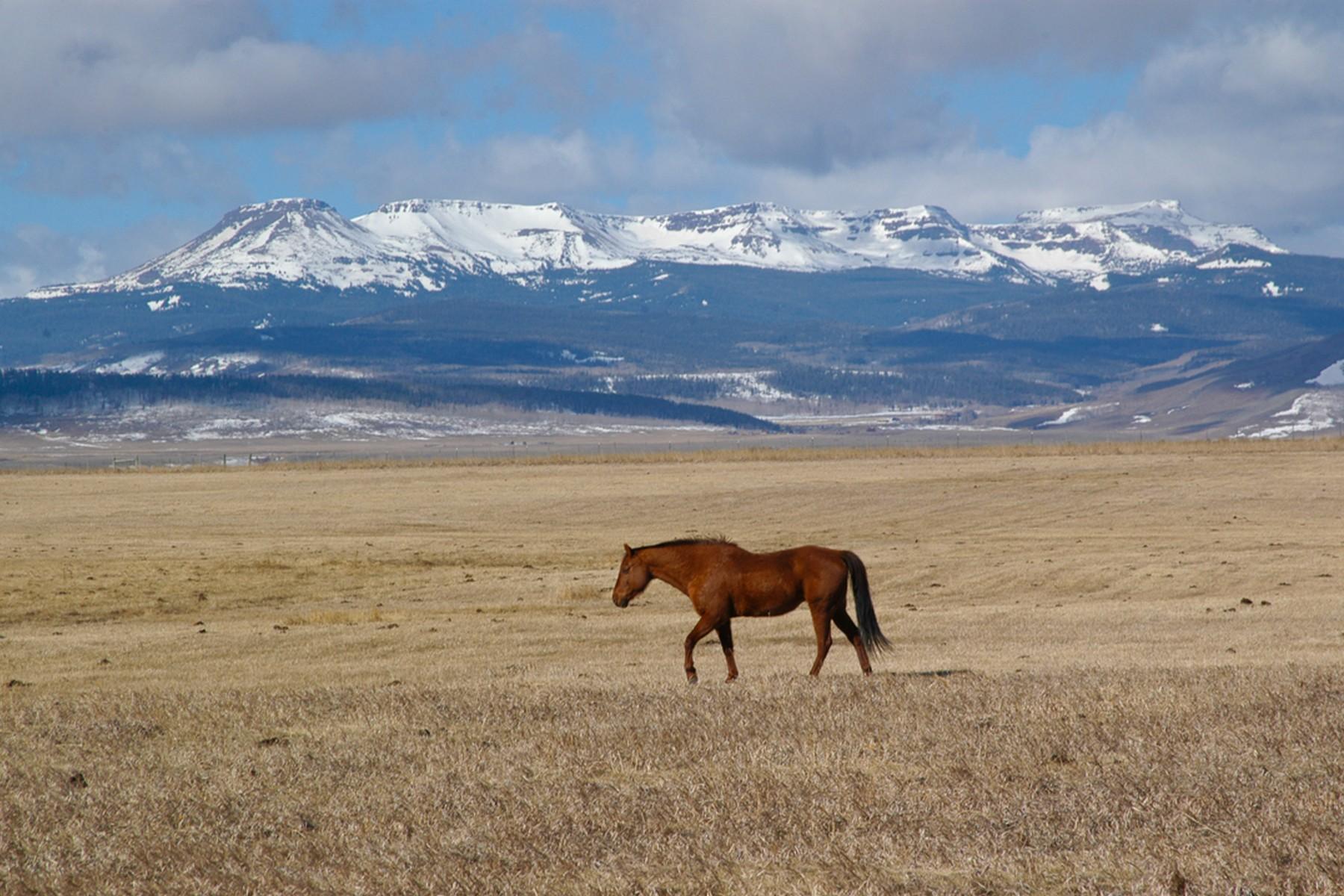 Landgut / Bauernhof / Plantage für Verkauf beim Toponas Ranch 9755 State Hwy 131 Toponas, Colorado 80479 Vereinigte Staaten