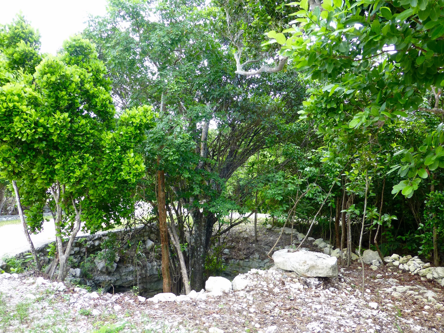 Additional photo for property listing at Great Estate-sized Lots 格里高利城, 伊路瑟拉 巴哈马