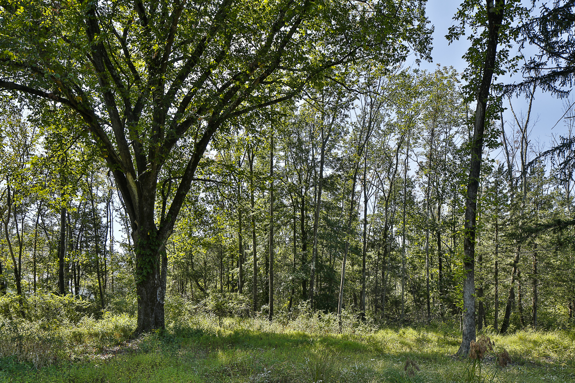 Additional photo for property listing at Build Your Dream Home on 5.77 Acres Near Princeton - Lawrence Township 8 Poe Road Princeton, Нью-Джерси 08540 Соединенные Штаты
