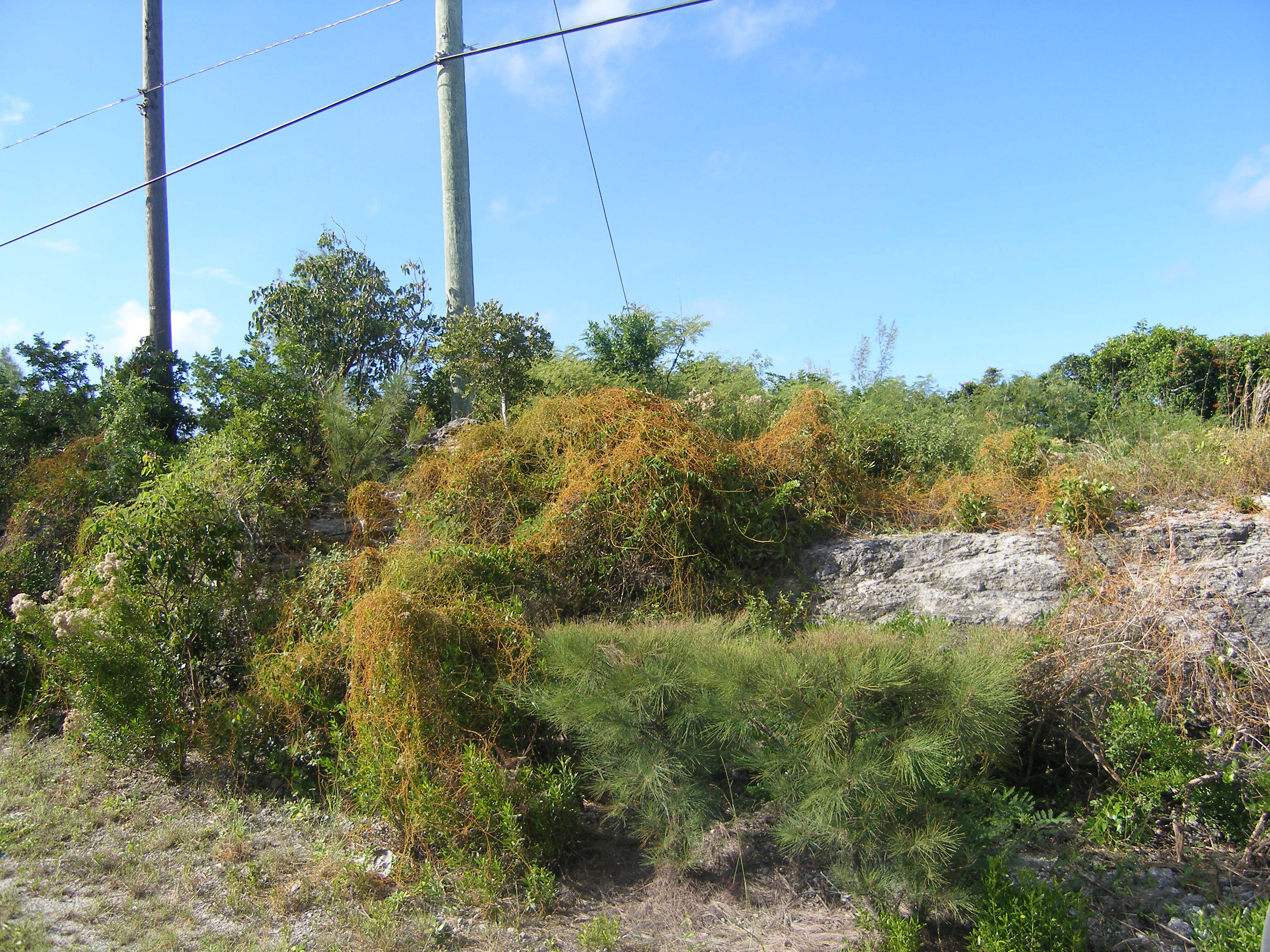 Terreno por un Venta en Lot 3, Block 50 Section D Rainbow Bay, Eleuthera Bahamas