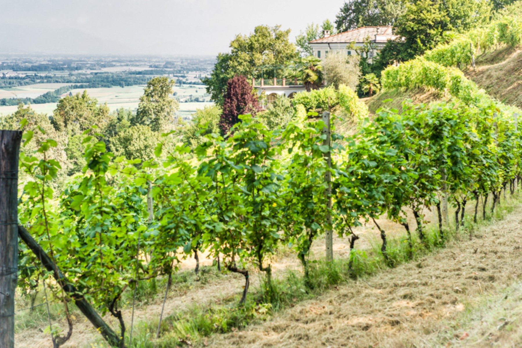 Additional photo for property listing at Splendid villa with a winery in a Piedmont Via Pagno  Terre Rosse Saluzzo, Cuneo 12100 Italie