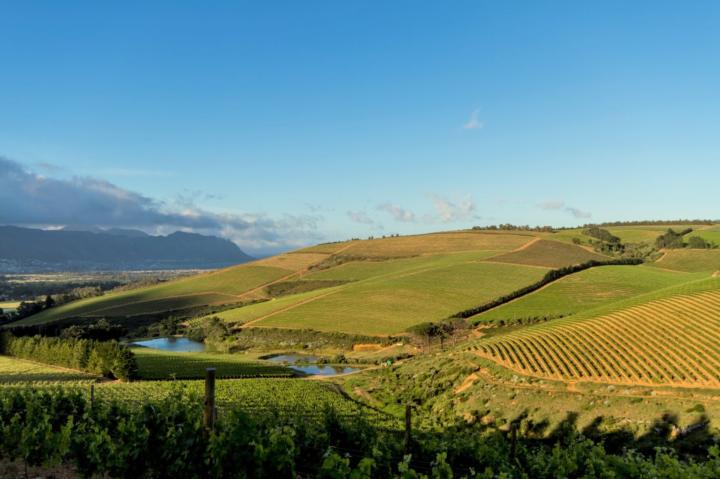 sales property at Magnificent Wine Farm in the Cape Winelands
