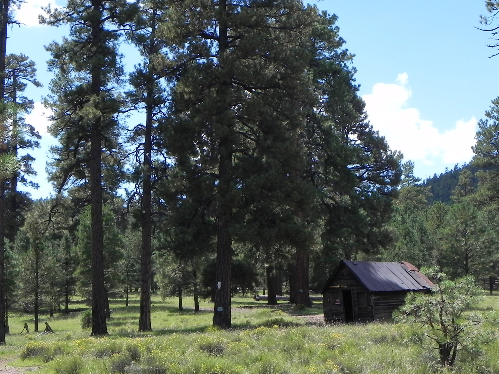 Property Of Stunning 318 Acres Surrounded by National Forest