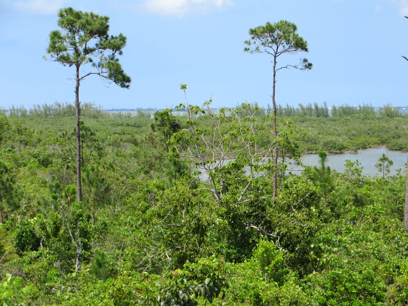 Land for Sale at Loggerhead Creek Marsh Harbour, Abaco Bahamas