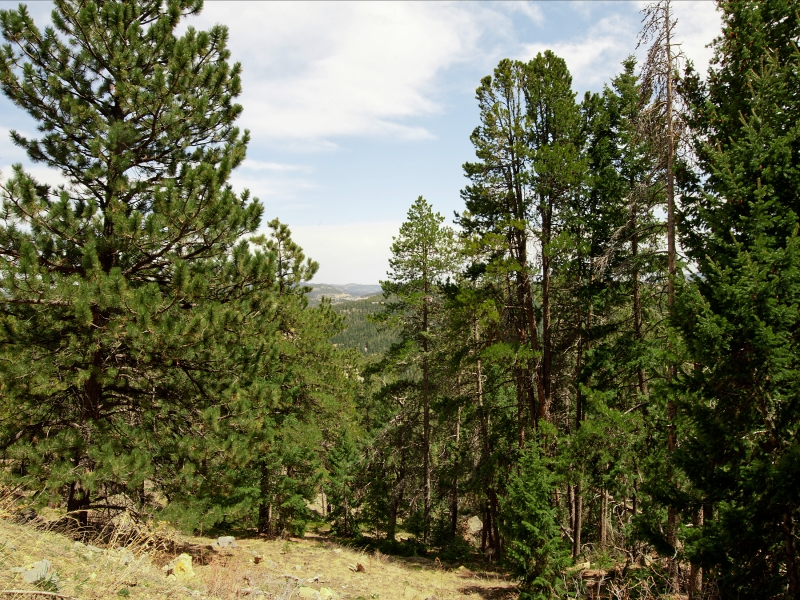 Terreno por un Venta en 1 West Meadow Road Evergreen, Colorado 80439 Estados Unidos