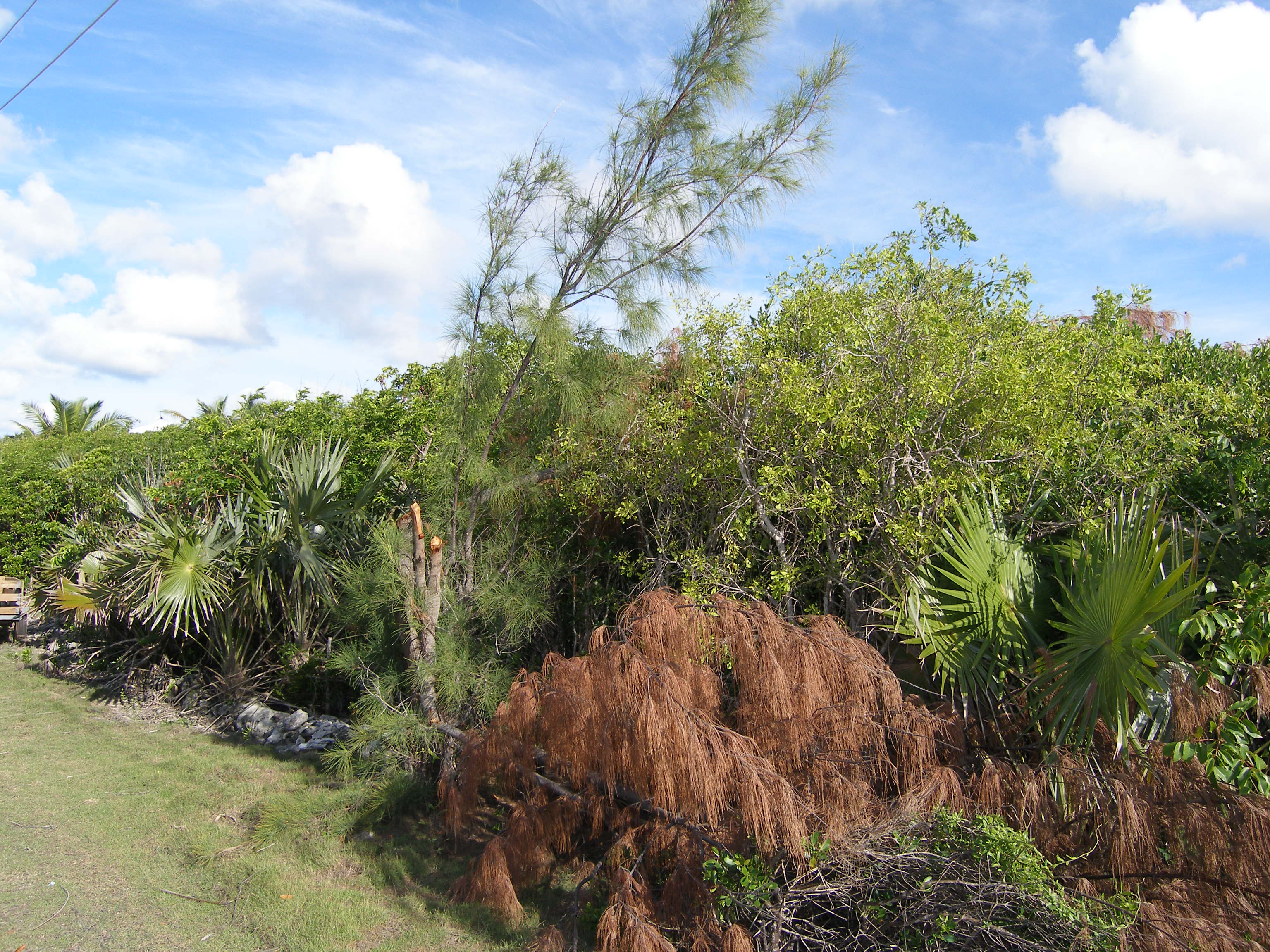 Additional photo for property listing at Residential Lot Rainbow Bay, Eleuthera Bahamas