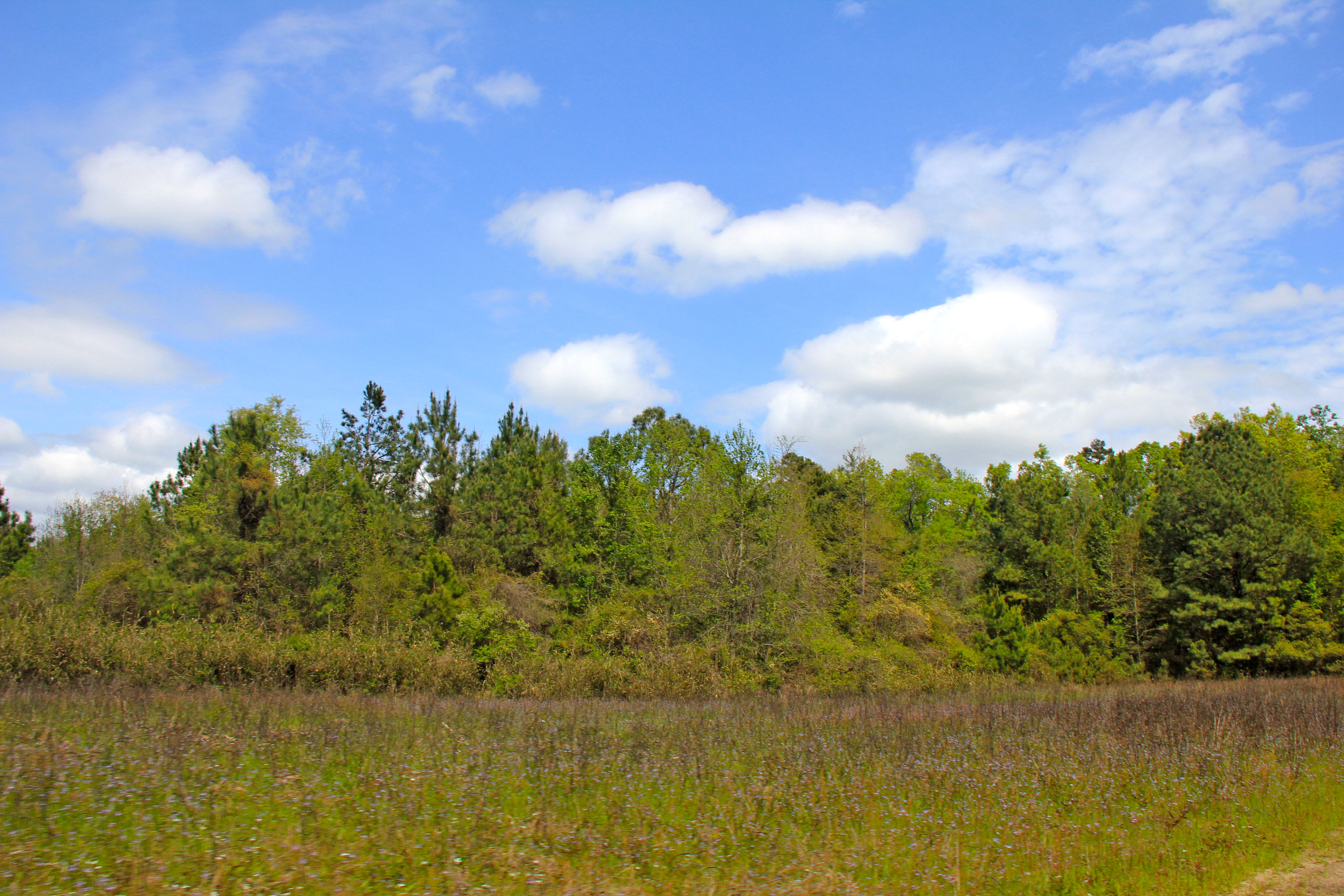 Land für Verkauf beim Cross Swamp 10 Round O Road Round O, South Carolina 29474 Vereinigte Staaten