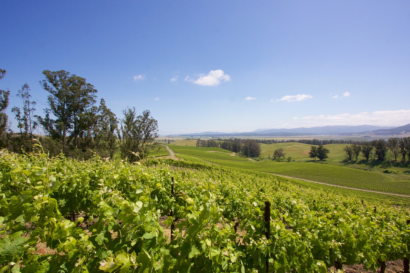 Land for Sale at Parliament Hills Vineyard 6509 Lakeville Hwy Petaluma, California, 94954 United States