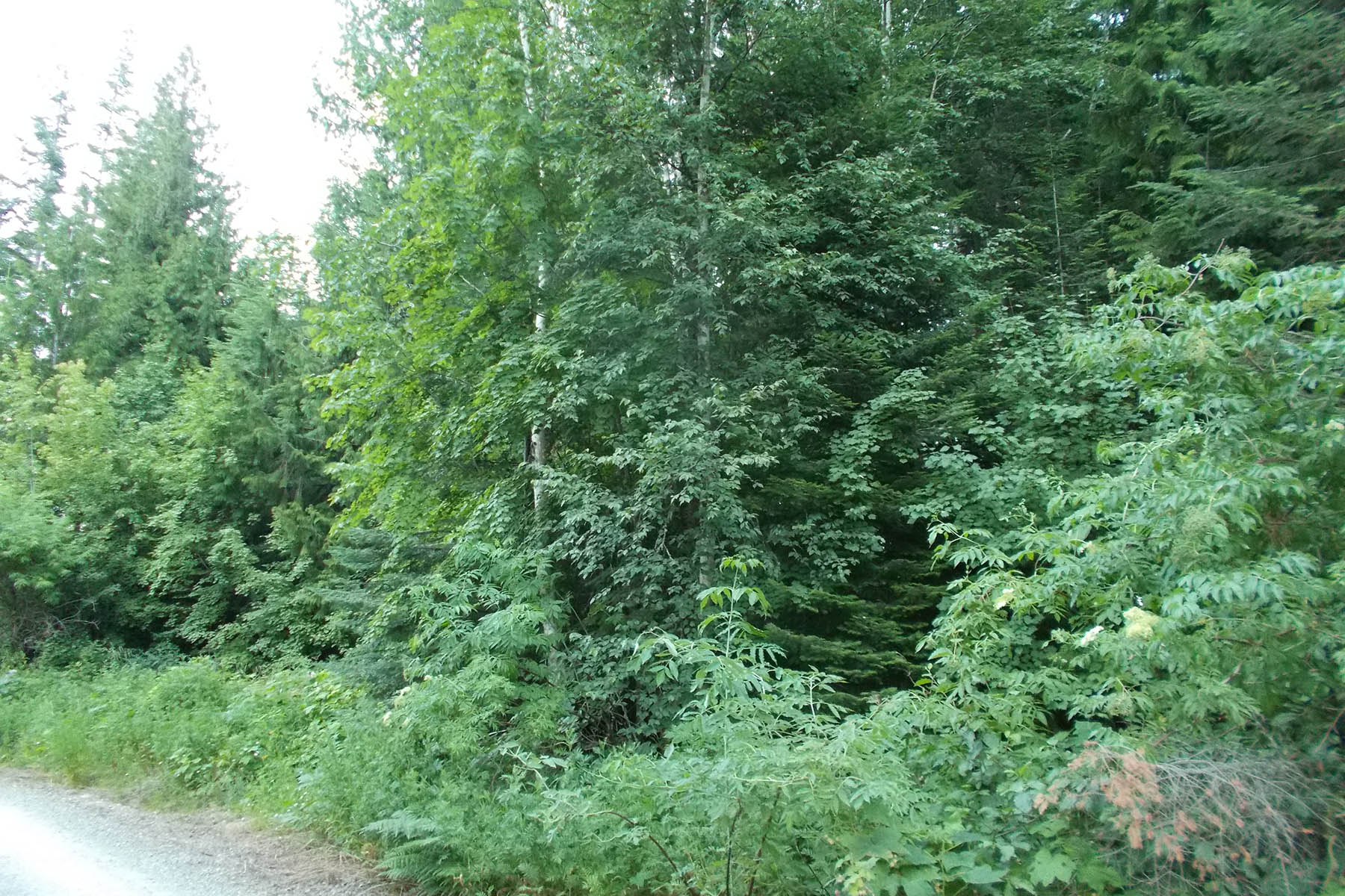 Land for Sale at Forested property just north of Sandpoint Lot 19 Scotts Lane Sandpoint, Idaho, 83864 United States