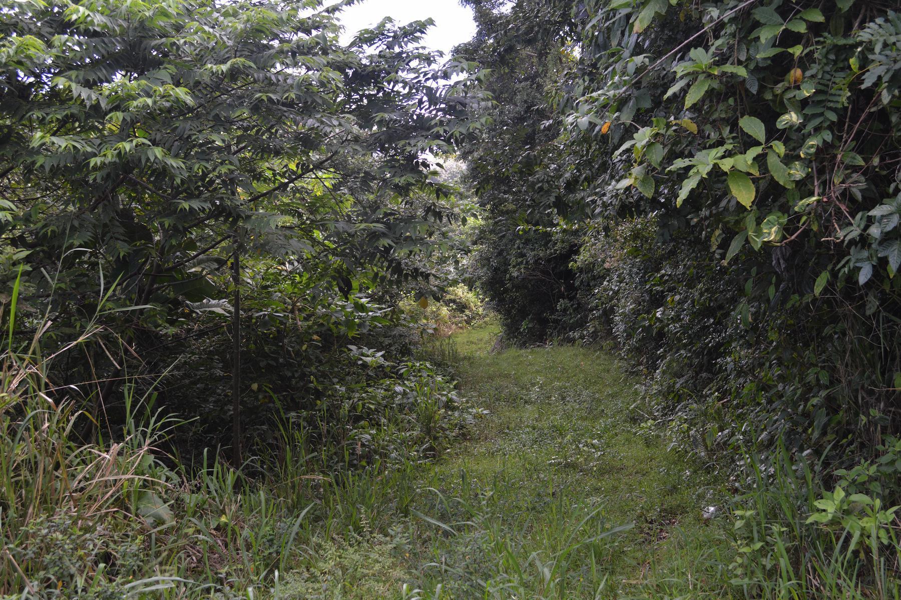 Arazi için Satış at Newbush Land Other Tortola, Tortola Ingiliz Virgin Adalari