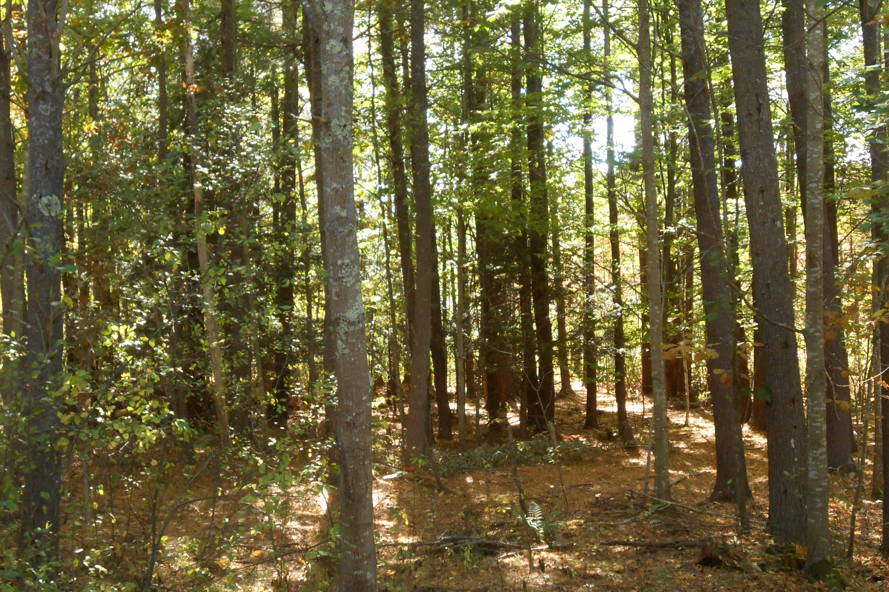 Land for Sale at Great York Home Site 10 Clyde Road York, Maine 03909 United States