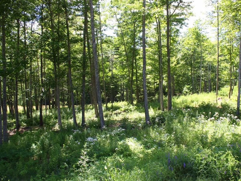 토지 용 매매 에 Mountain Arrow 30 Mountain Arrow Camden, 마이애미 04843 미국
