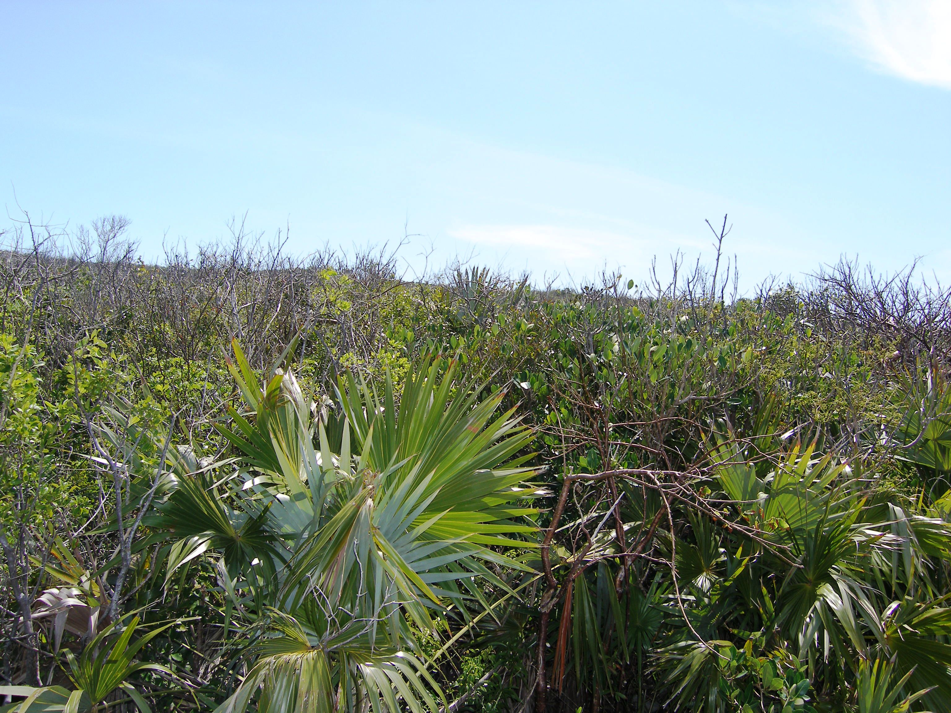 Land for Sale at Hillside Lot Gregory Town, Eleuthera Bahamas