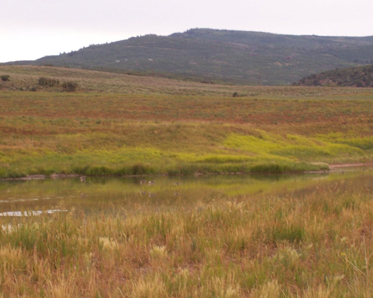 Terrain pour l Vente à Ranch at Coulter Creek Lot 17 Carbondale, Colorado, 81623 États-Unis