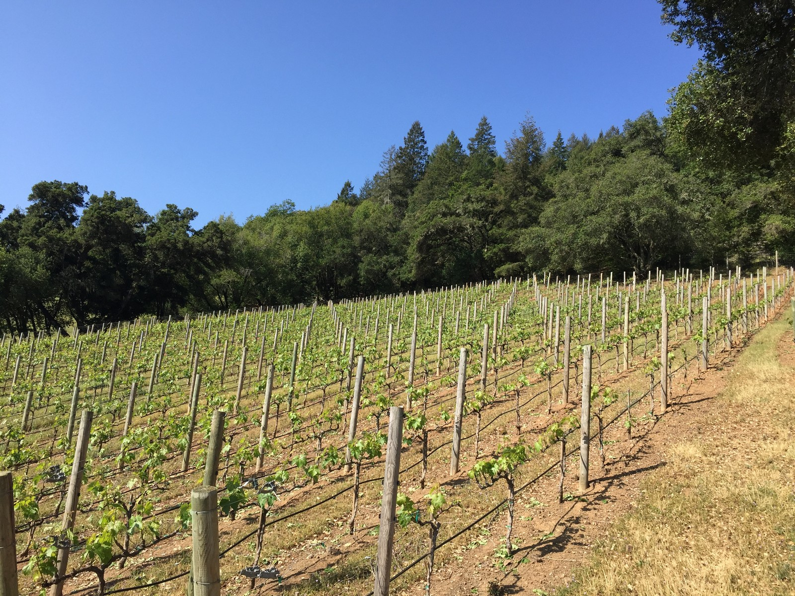 Property For Sale at St. Peter's Vineyard