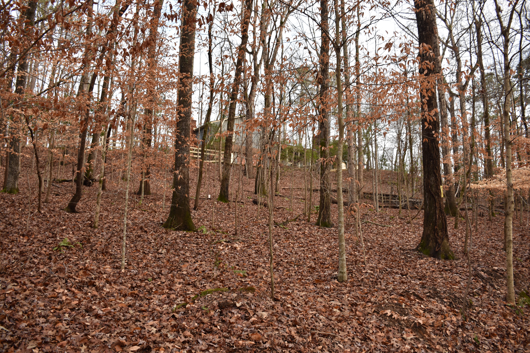 sales property at Chattahoochee River Frontage Homesite
