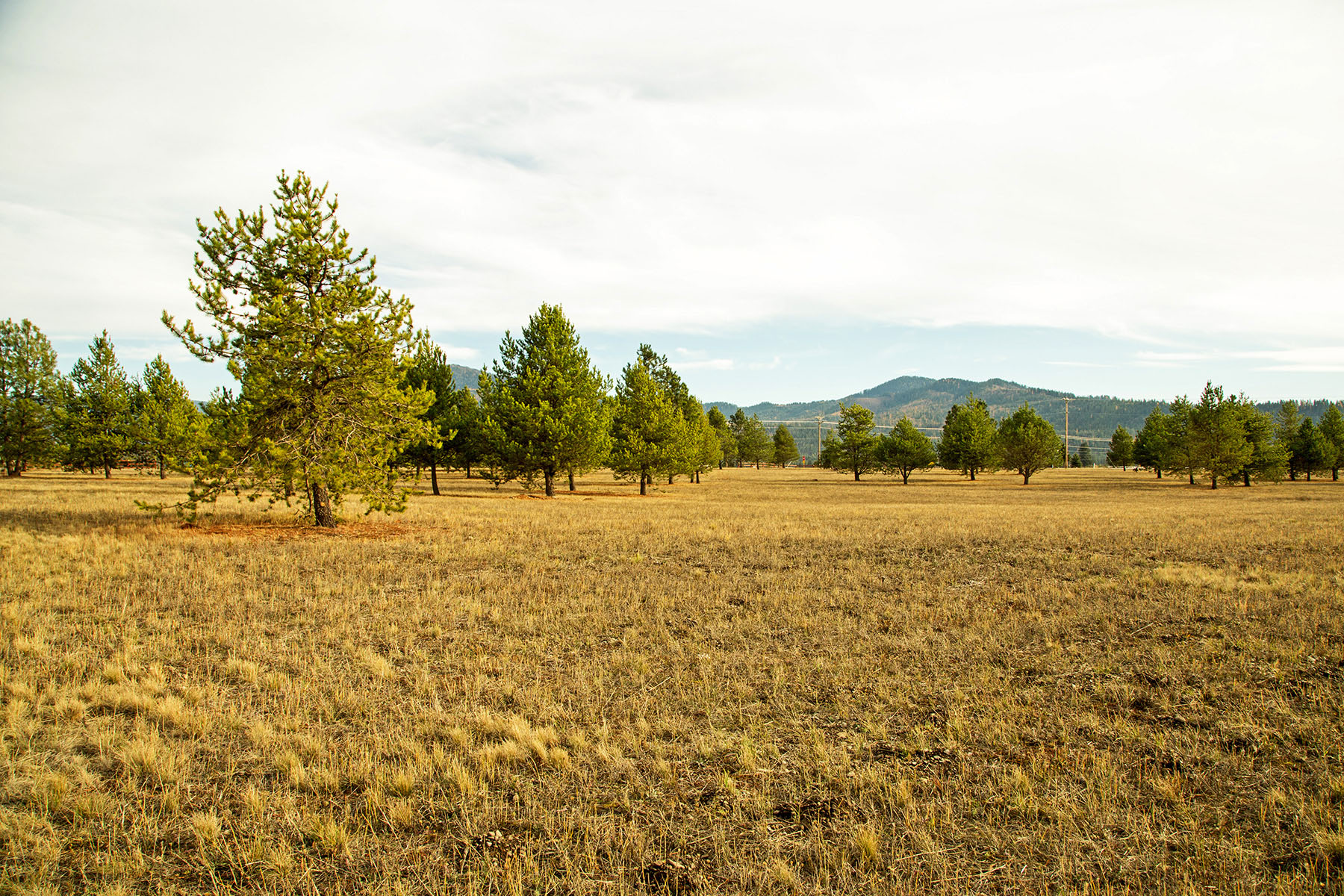 Terreno per Vendita alle ore Level Open Acreage in Athol NNA Old Hwy 95 Athol, Idaho, 83801 Stati Uniti