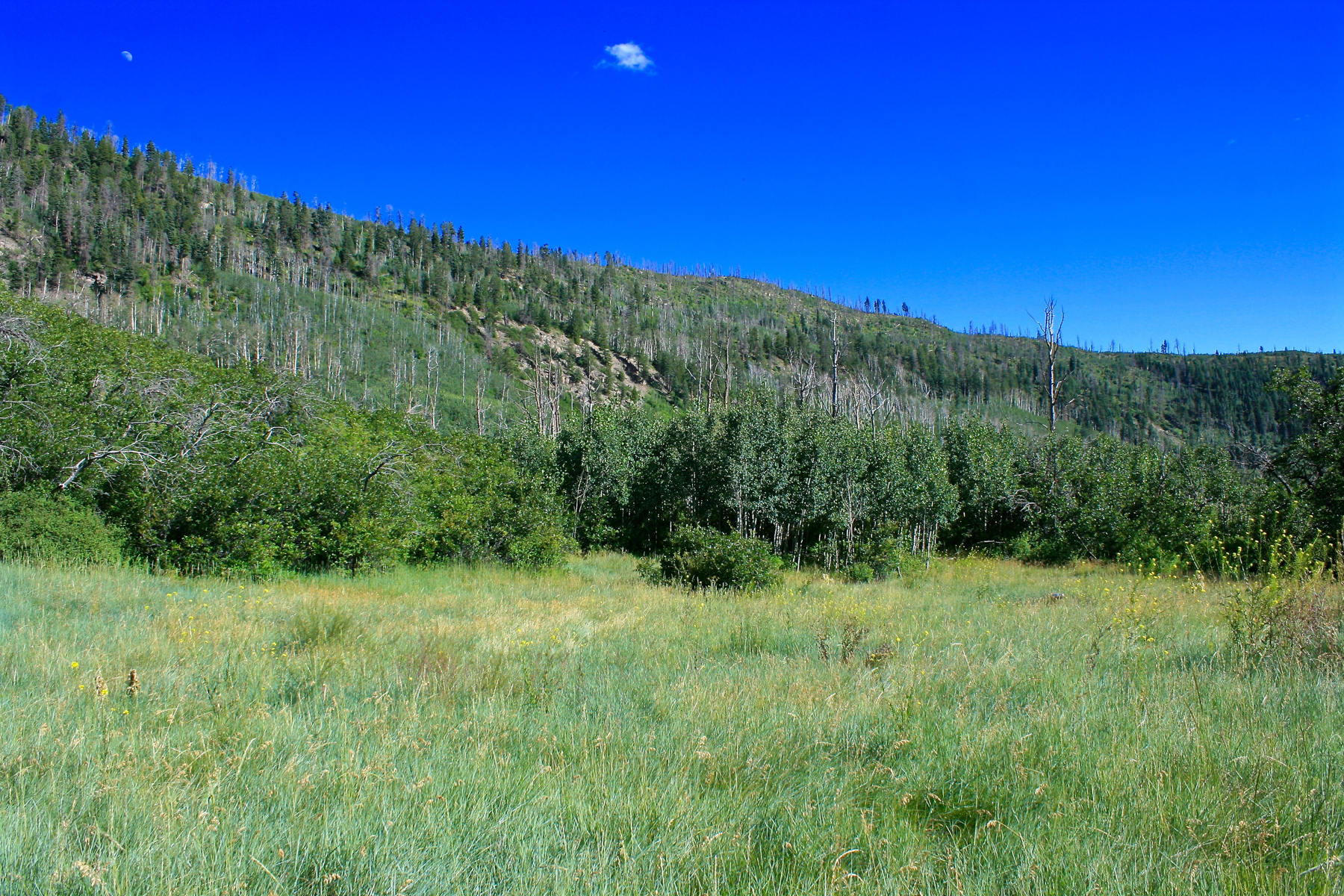 Land for Sale at Red Tail Mountain Ranch Lot 19 464 Star Peak Durango, Colorado, 81301 United States