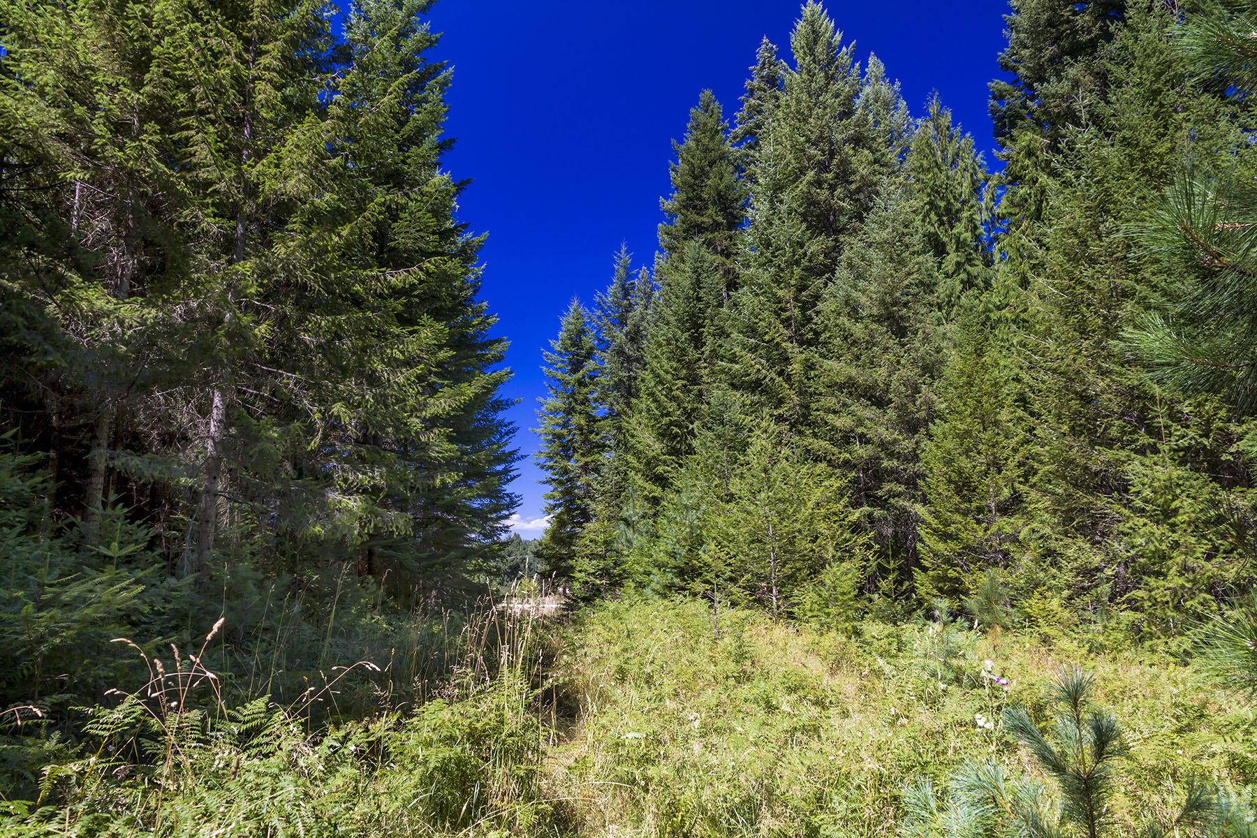 Land for Sale at Creek frontage on Strong Creek Lot 7 Sailor Lane Priest River, Idaho 83856 United States